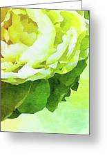 Peony In Bloom Greeting Card