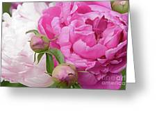 Peony Pair In Pink And White  Greeting Card