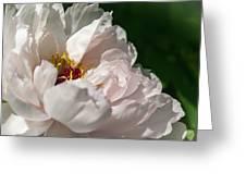 Peony Petals Greeting Card