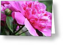 Peony Profile Greeting Card