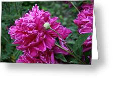 Peony Protege Greeting Card