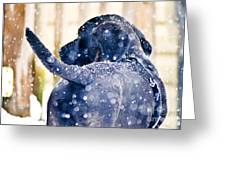 Pepper And The Snow Storm Greeting Card