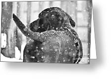 Pepper At Snow Greeting Card