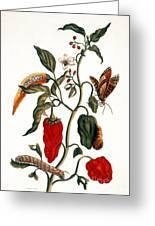 Pepper Plant Greeting Card