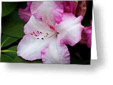 Peppermint Rhodie Greeting Card