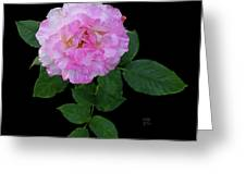 Peppermint Rose1 Cutout Greeting Card