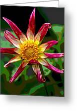 Peppermint Sunburst 2 Greeting Card