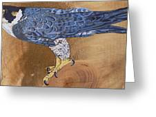 Peragrine Falcon Greeting Card