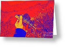 Perch Red Yellow Blue Greeting Card