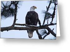 Perched And Proud  Greeting Card