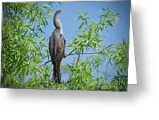 Perched Anhinga Greeting Card
