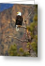 Perched At Smith Rock Greeting Card