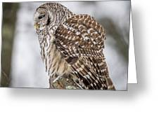 Perched Barred Owl Greeting Card