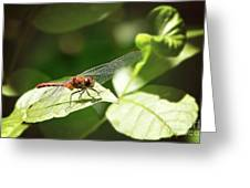 Perched Dragonfly Greeting Card