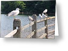 Perched Gulls Greeting Card