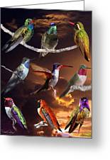 Perched Hummingbird Collage Greeting Card