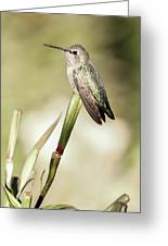Perched Hummingbird On Flower Greeting Card