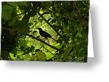 Perched In Green  Greeting Card