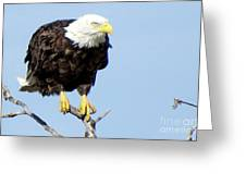 Perched On A Tree Greeting Card