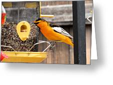 Perched Oriole Greeting Card