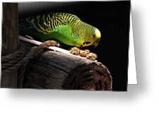 Perched Parakeet Greeting Card