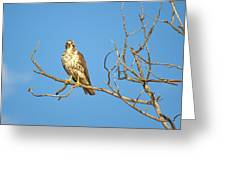 Perched Poser Greeting Card