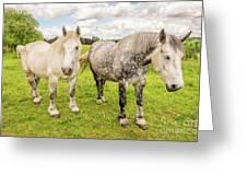 Percherons Horses Greeting Card