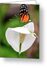 Perching Butterfly Greeting Card