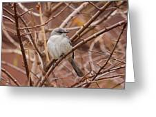 Perching On A Winter's Day  Greeting Card