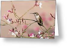 Perching Ruby-throated Hummingbird Greeting Card