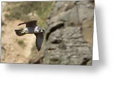 Peregrine Falcon In Flight Greeting Card