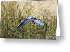 Peregrine Falcon Trips Greeting Card