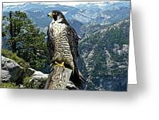 Peregrine Falcon, Yosemite Valley, Western Sierra Nevada Mountain, Echo Ridge Greeting Card
