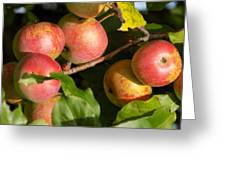 Perfect Apples Greeting Card