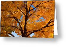 Perfect Autumn Day With Blue Skies Greeting Card