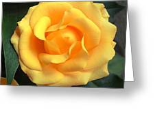 Perfect Bloom Greeting Card