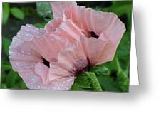 Perfect Peach Poppy Greeting Card