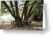 Perfect Picnic Tree Greeting Card