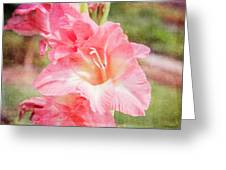 Perfect Pink Canna Lily Greeting Card