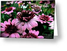 Perfect Pink Greeting Card
