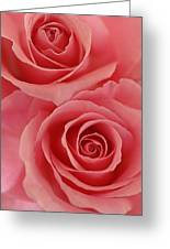 Perfect Pink Roses Greeting Card