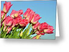Perfect Pink Tullips Greeting Card