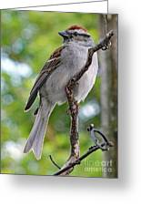 Perfect Profile - Chipping Sparrow Greeting Card