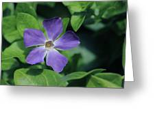 Perfect Purple Periwinkle Greeting Card