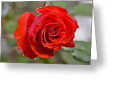 Perfect Red Rose Greeting Card