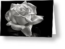 Perfect Rose In Black And White Greeting Card
