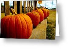 Perfect Row Of Pumpkins Greeting Card