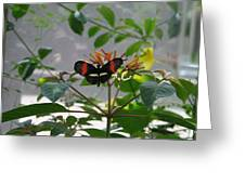 Perfect Set - Butterfly Greeting Card