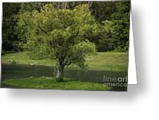 Perfect Tree Swing Greeting Card