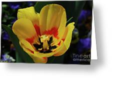 Perfect Yellow And Red Flowering Tulip In A Garden Greeting Card